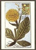 BELGIQUE Carte Maximum - Hympochoeris Maculata - Other