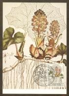 BELGIQUE Carte Maximum - Tussilago Petasites - Other