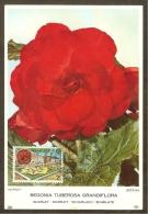 BELGIQUE Carte Maximum - Lochristi Et Begonia - Other