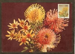 AFRIQUE SUD Carte Maximum - Leucospermum Cordifoliu - Afrique Du Sud (1961-...)