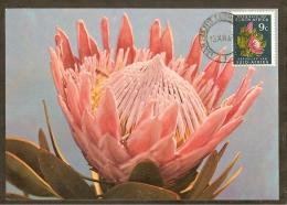 AFRIQUE SUD Carte Maximum - Protea Roupelliae - Afrique Du Sud (1961-...)
