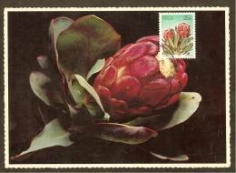 AFRIQUE SUD Carte Maximum - Protea Grandiceps - Afrique Du Sud (1961-...)