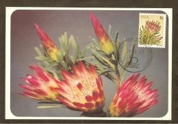 AFRIQUE SUD Carte Maximum - Protea Repens - Afrique Du Sud (1961-...)