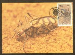 AFRIQUE SUD Carte Maximum - Chaetodera Regalis - Afrique Du Sud (1961-...)