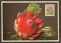 AFRIQUE SUD Carte Maximum - Protea Aristata - Afrique Du Sud (1961-...)
