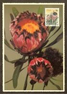 AFRIQUE SUD Carte Maximum - Protea Neriifolia - Afrique Du Sud (1961-...)