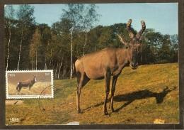 AFRIQUE SUD Carte Maximum - Antilope Bontebok - Afrique Du Sud (1961-...)