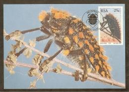 AFRIQUE SUD Carte Maximum - Julodis Viridipes - Afrique Du Sud (1961-...)
