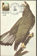 ETATS UNIS Carte Maximum - Tête D'Aigle Américain - Maximumkarten (MC)