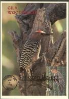 ETATS UNIS Carte Maximum - Pic Des Saguaros - Maximumkarten (MC)