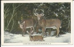 Carte Postale  Etats Unis  : A Deer Family In The White Mountains  N.H - White Mountains