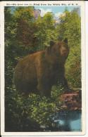 Carte Postale  Etats Unis  : We Bear In The White Mountains  N.H - White Mountains