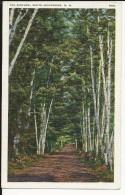 Carte Postale  Etats Unis  : The Birches - White Mountains  N.H - White Mountains