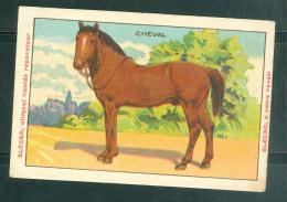 Image - Cheval   -  Blecao - Bledine Jacquemaire - Mala6526 - Trade Cards