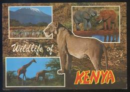 Kenia *Safari Through Game Parks* Ed. Kenya Stationers Nº 122. Circulada 1979. - Kenia