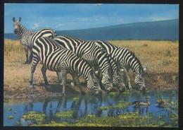 Kenia *African Wild Life. Zebra* Ed. Sapra Studio Nº 26. Circulada 1989. - Kenia