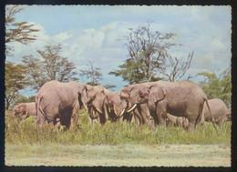 Kenia *East African Wild Life Elephants* Ed. Uganda Markitex Nº 806. Circulada. - Kenia