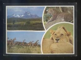 Kenia *Popular Kenya Scenes* Ed. Kall Kwik Nº M-2052. Escrita. - Kenia