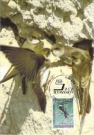 LUXEMBOURG  CARTE MAXIMUM  NUM-YVERT  1283 FAUNE PROTECTION DE LA NATURE  OISEAUX MENACES - Cartes Maximum