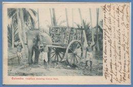 ASIE - STRI LANKA - ( CEYLON )  --  COLOMBO --  Eléphant Drawing Cocoa Nuts - Sri Lanka (Ceylon)