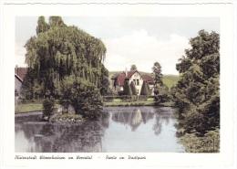 Witzenhausen Im Werratal - Partie Im Stadtpark - Witzenhausen