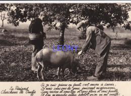 CPSM 10X15  Du PERIGORD (24) - CHERCHEUR De TRUFFE -  COCHON - France