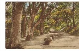 RB 1055 -  J. Salmon Postcard - Kewstoke Woods - Weston-super-Mare - Somerset - Weston-Super-Mare
