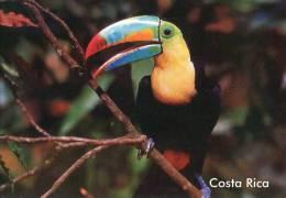 Lote PEP842, Costa Rica, Postal, Postcard, Ave, Bird, Tucan - Costa Rica