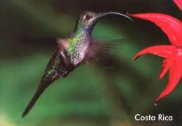 Lote PEP843, Costa Rica, Postal, Postcard, Ave, Bird, Colibri - Costa Rica
