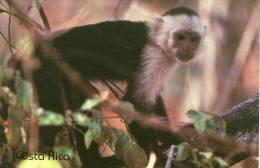 Lote PEP845, Costa Rica, Postal, Postcard, Fauna, Mono, White Face Monkey - Costa Rica