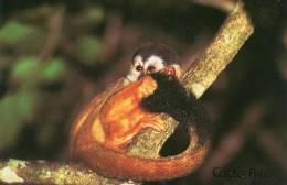 Lote PEP846, Costa Rica, Postal, Postcard, Fauna, Mono, Squirrel Monkey - Costa Rica
