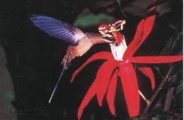 Lote PEP847, Costa Rica, Postal, Postcard, Fauna, Ave, Bird, Colibri Ermitaño - Costa Rica