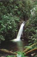 Lote PEP855, Costa Rica, Postal, Postcard, Reserva Del Bosque Nuboso Monteverde, Forest Reserve, Waterfall - Costa Rica