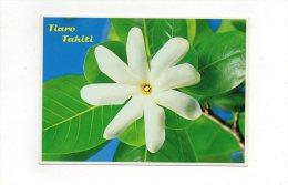Tiare Tahiti (Gardénia Tahitensis) - Fleurs