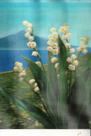 MATERIAL - 3D - Maybells 2, TOPPAN - Ansichtskarten
