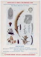 Publicité Pharmacie Fiche Plante Médicinale Ergot Du Seigle 1920  Très Bon état - Advertising