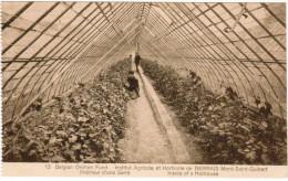 Institut Agricole Et Horticole De Bierbais, Mont Saint Guibert, Interieur D'une Serre (pk21566) - Mont-Saint-Guibert