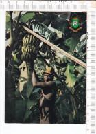 REPUBLIQUE    DE  LA  COTE  D  IVOIRE  -    Culture  De La   Banane - Ivory Coast