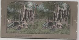 Vue Stéréoscopique Sur Carton - La Récompense De Chaque Chasseur - Tach Hunter Secured His Reward - Cartes Stéréoscopiques
