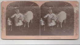 Vue Stéréoscopique Sur Carton - The Little Peacemaker - Chien Mouton - Chiens