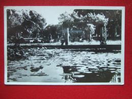 VIET-NAM - SAIGON - LE JARDIN BOTANIQUE  AU FOND LE MUSEE - - Vietnam