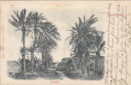 Italie -  Bordighera - Carte Précurseur En Relief - Palmeraie - 1901 - Imperia