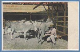 CUBA -- Burra Milk Service - Cuba