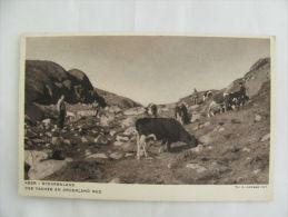 Postcard Postkarte Greenland Grönland Cow Køer I Sydgrønland Unused - Zonder Classificatie