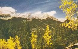 Colorado Rocky Mountain National Park Aspens In Autumn In The Rocky Mountain National Park