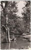 Douala Cameroon, Tokoto River Scene, C1950s Vintage Real Photo Postcard - Cameroon