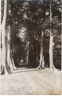 Bamako Mali, Allee De Fromagers, Village Road In Woods, C1930s/50s Vintage Real Photo Postcard - Mali