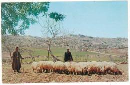 FRA CARTOLINA GIORDANIA THE SHEPHERD'S FIELD. THE TOWN OF BETHLEHEM IS IN THE BACKGROUND. VIAGGIATA 1964 VERSO NAPOLI  – - Giordania
