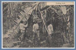 AMERIQUE --  COSTA RICA - Cutting Fruit - Costa Rica