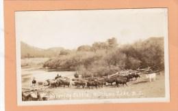 Cattle Drive Near, WILLIAMS LAKE, BC, CARIBOO, BRITISH COLUMBIA, Postcard, CANADA, Post Card, Carte Postale - British Columbia